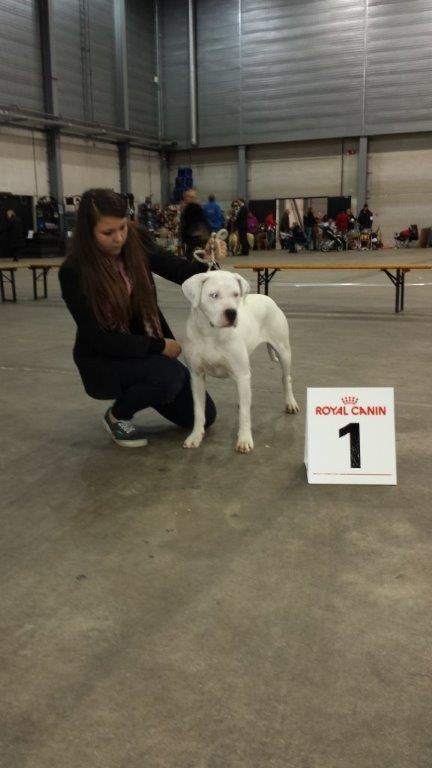 Milla_Del_Grande_Casador_Branco_best_of_breed_Den-Bosch_2013_11